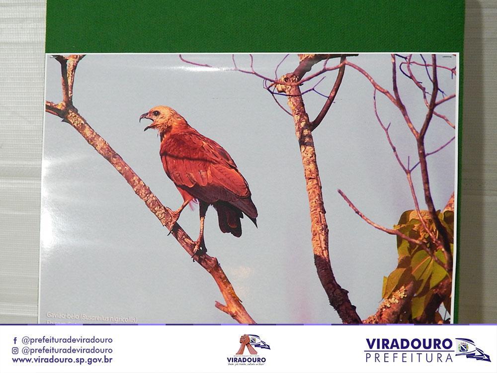EXPOSIÇÃO FOTOGRÁFICA DA AVIFAUNA VIRADOURENSE