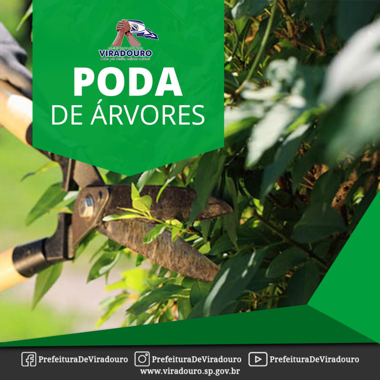 PODA DE ÁRVORES LIBERADA